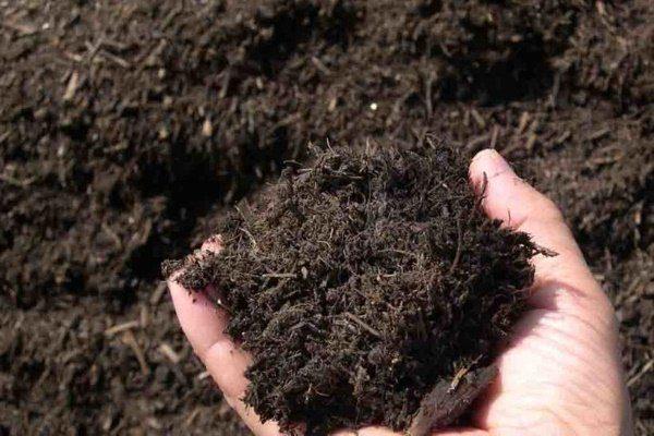 Почва с гумусом