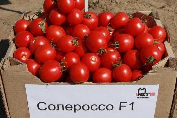 Урожай томатов Солероссо