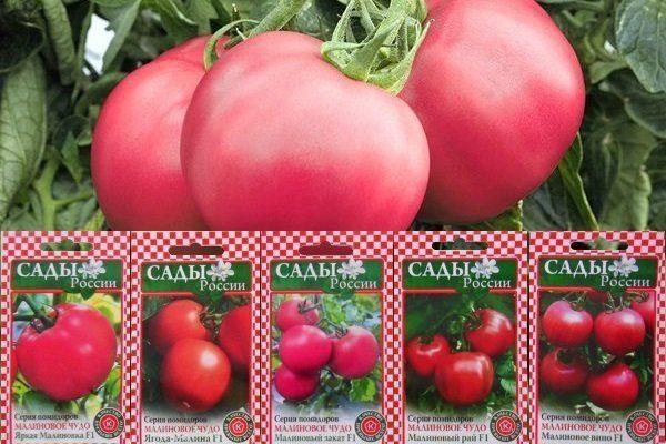 Сорта помидоров Малиновое чудо