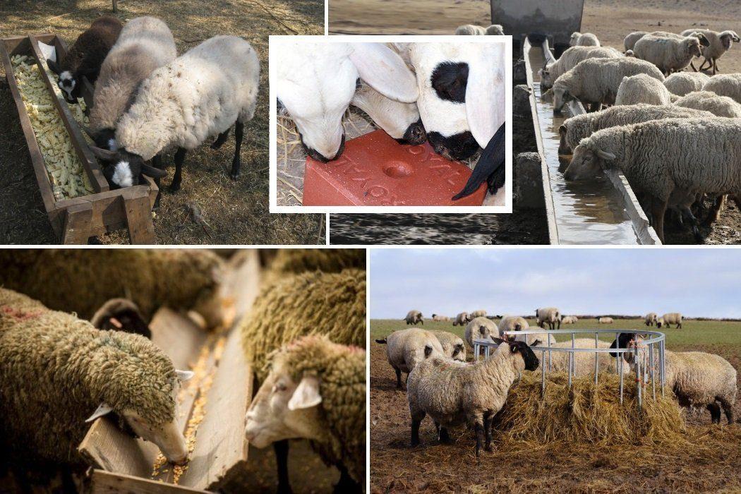 Оборудование в загоне для овец
