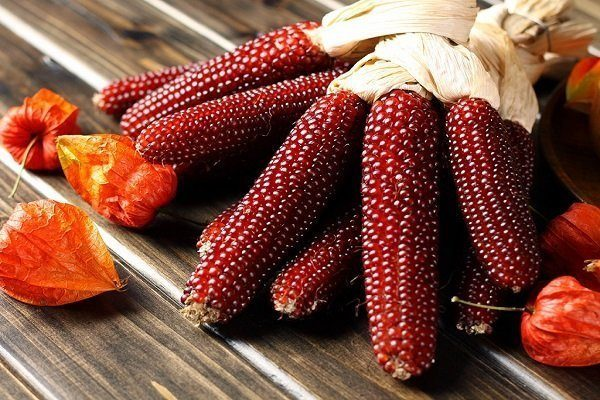 Оахаканская красная