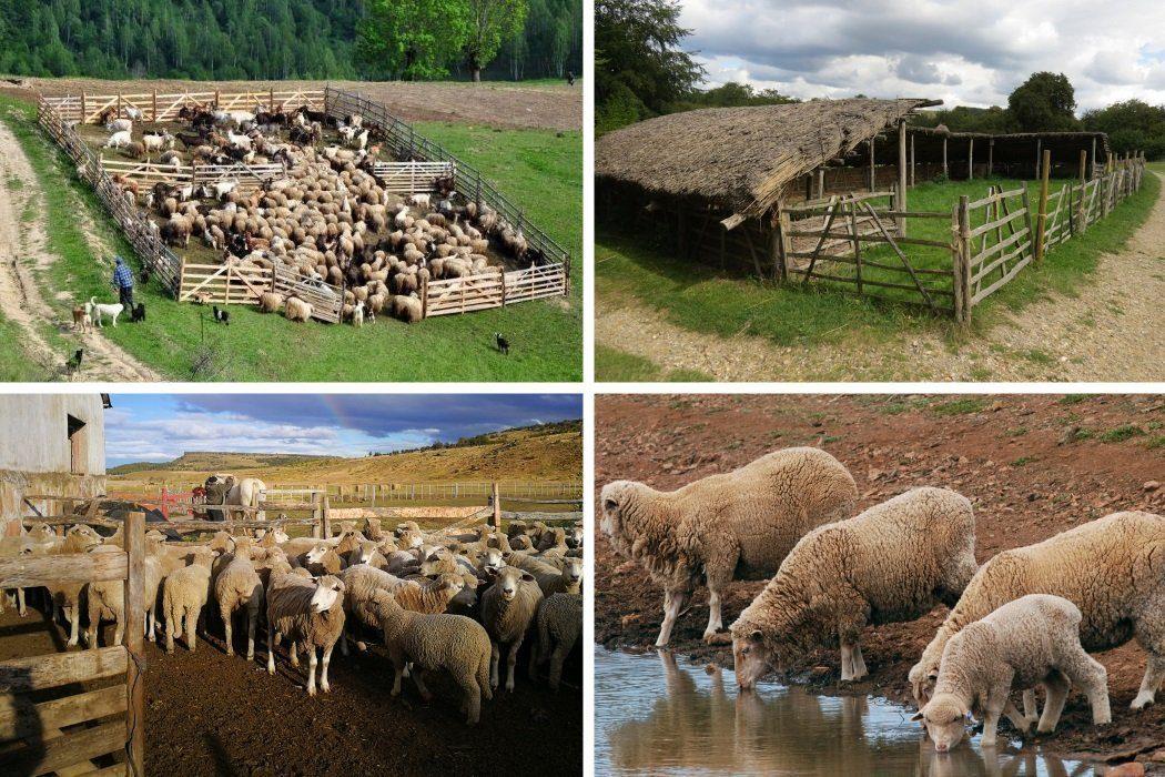 Место для овечьего загона