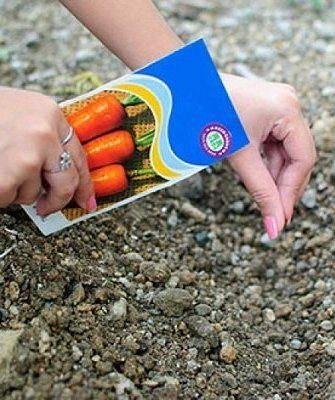 Посадка моркови осенью под зиму