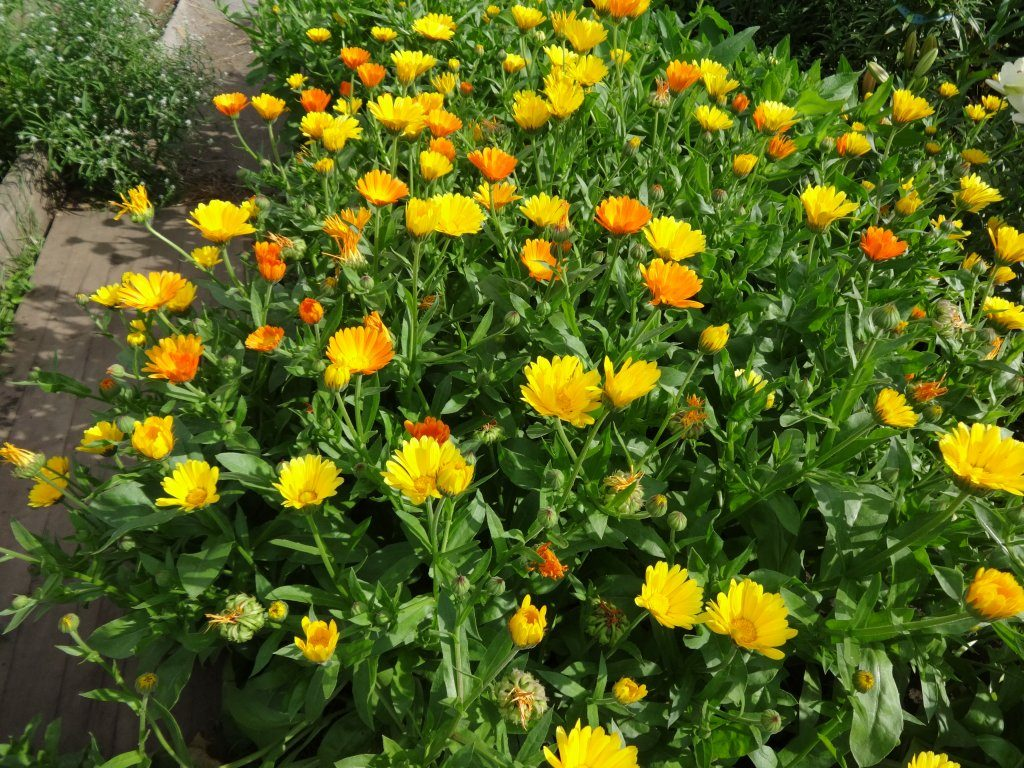 Цветники на нашей даче