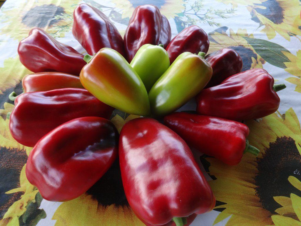 Плоды перца Атлант