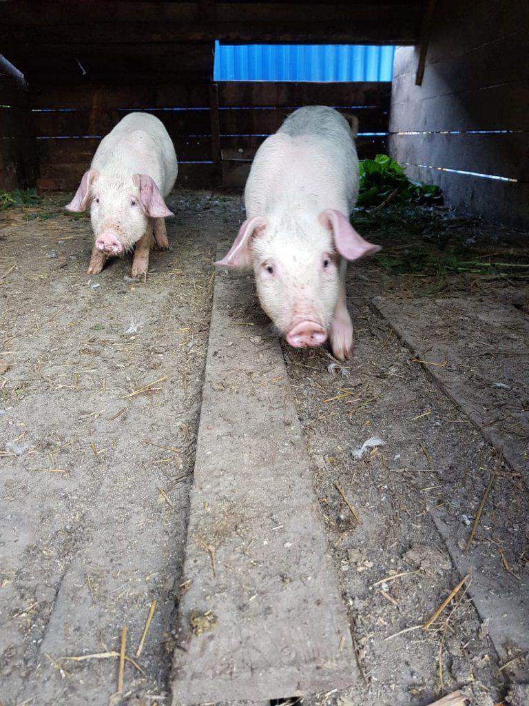 Каких животных содержать в деревне? Обзор нашего хозяйства