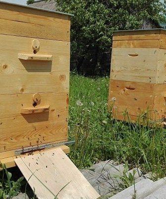 Пчелиный улей