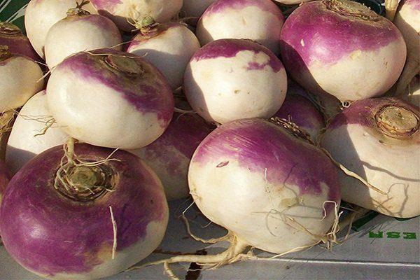 Ранняя пурпурная