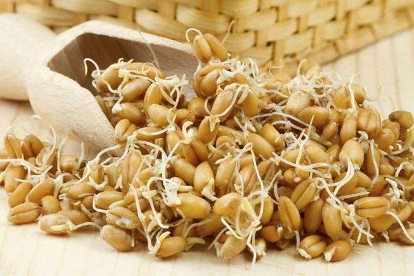 Проросшая пшеница дома