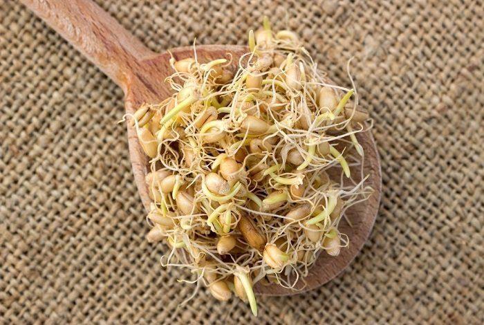 Прорастить пшеницу