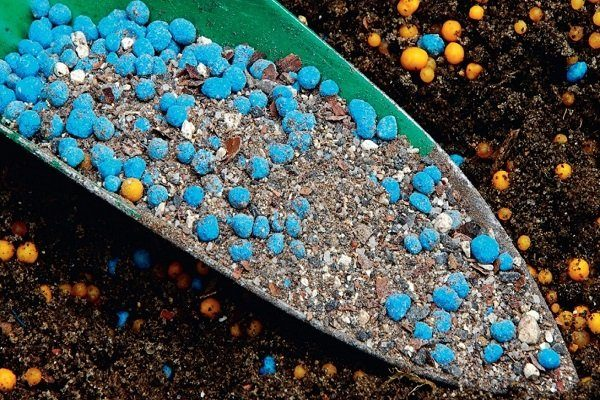 Подкормка ячменя карбамидом