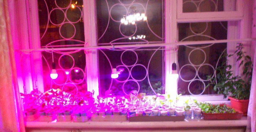 Бюджетная подсветка для рассады на окне
