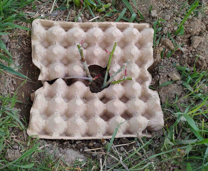 Лоток от яиц в качестве защиты от травы