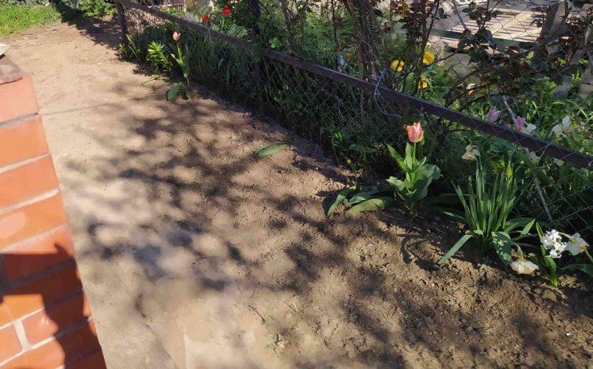 Дорожка во дворе