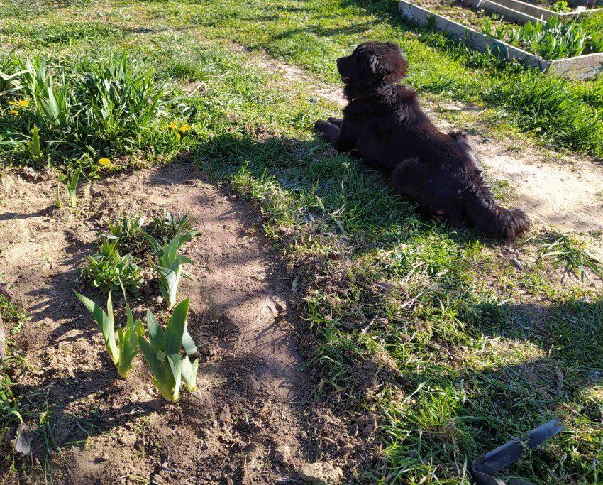 цветы очищены от травы