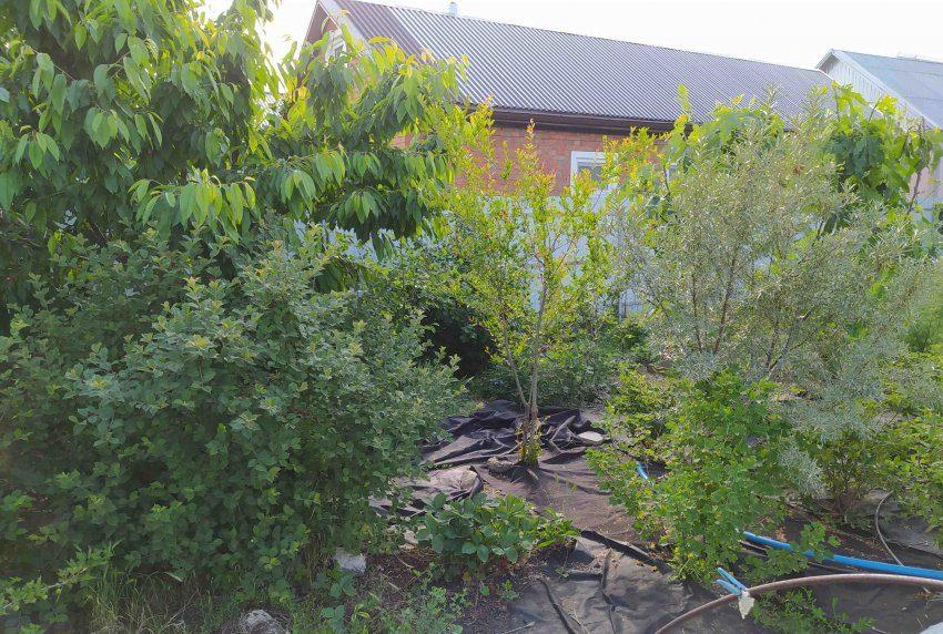 Агроспам в саду