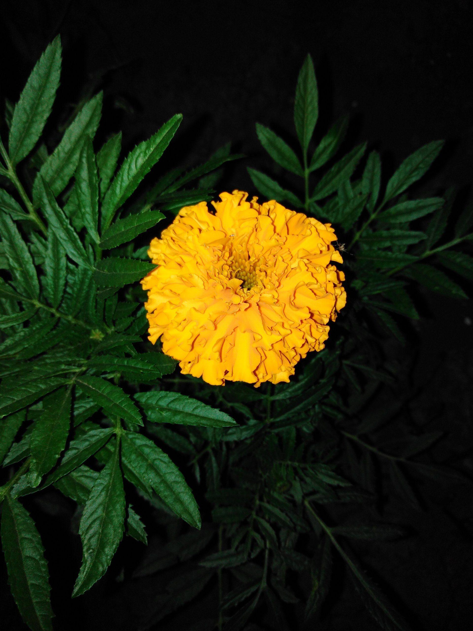 Цветы из нашего цветника