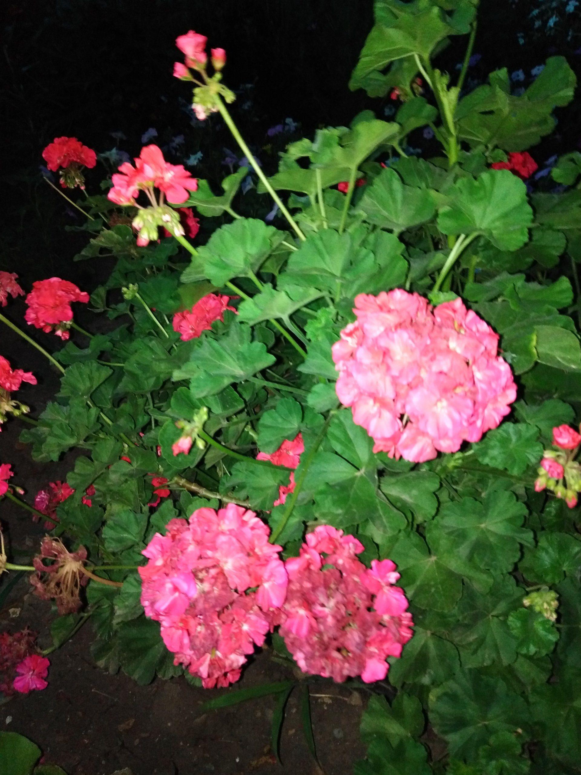 Цветы моей мамы