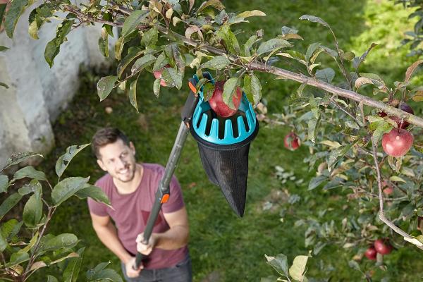 Собирает яблоки