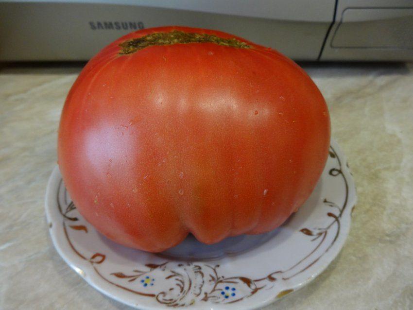 Про томаты, семена которых мне прислали из Казахстана