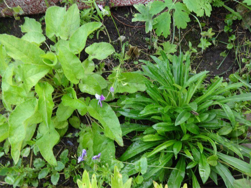 Новые цветы на нашей даче