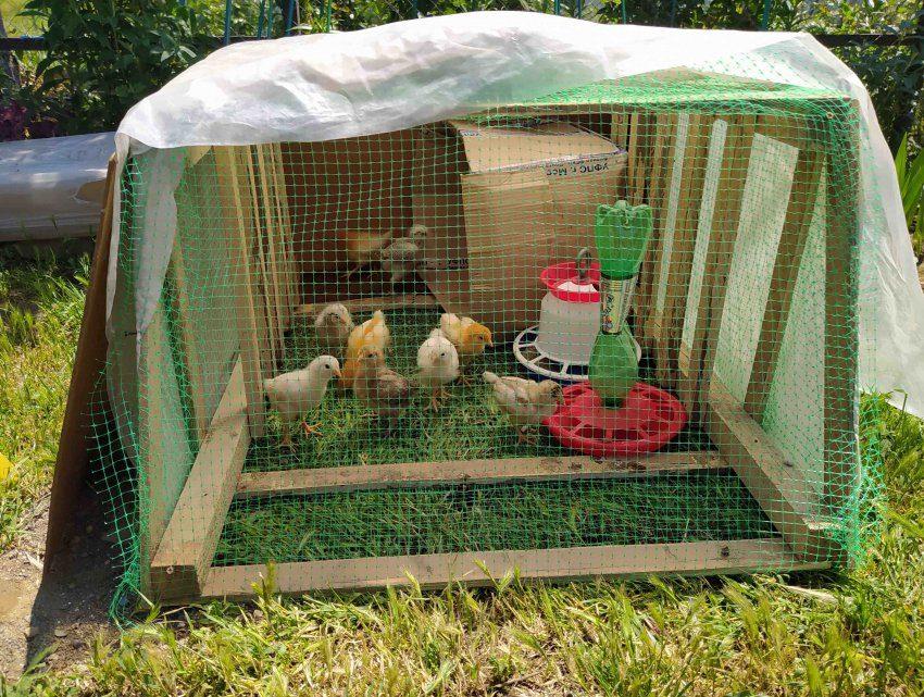 ВУличный вольер для цыплят