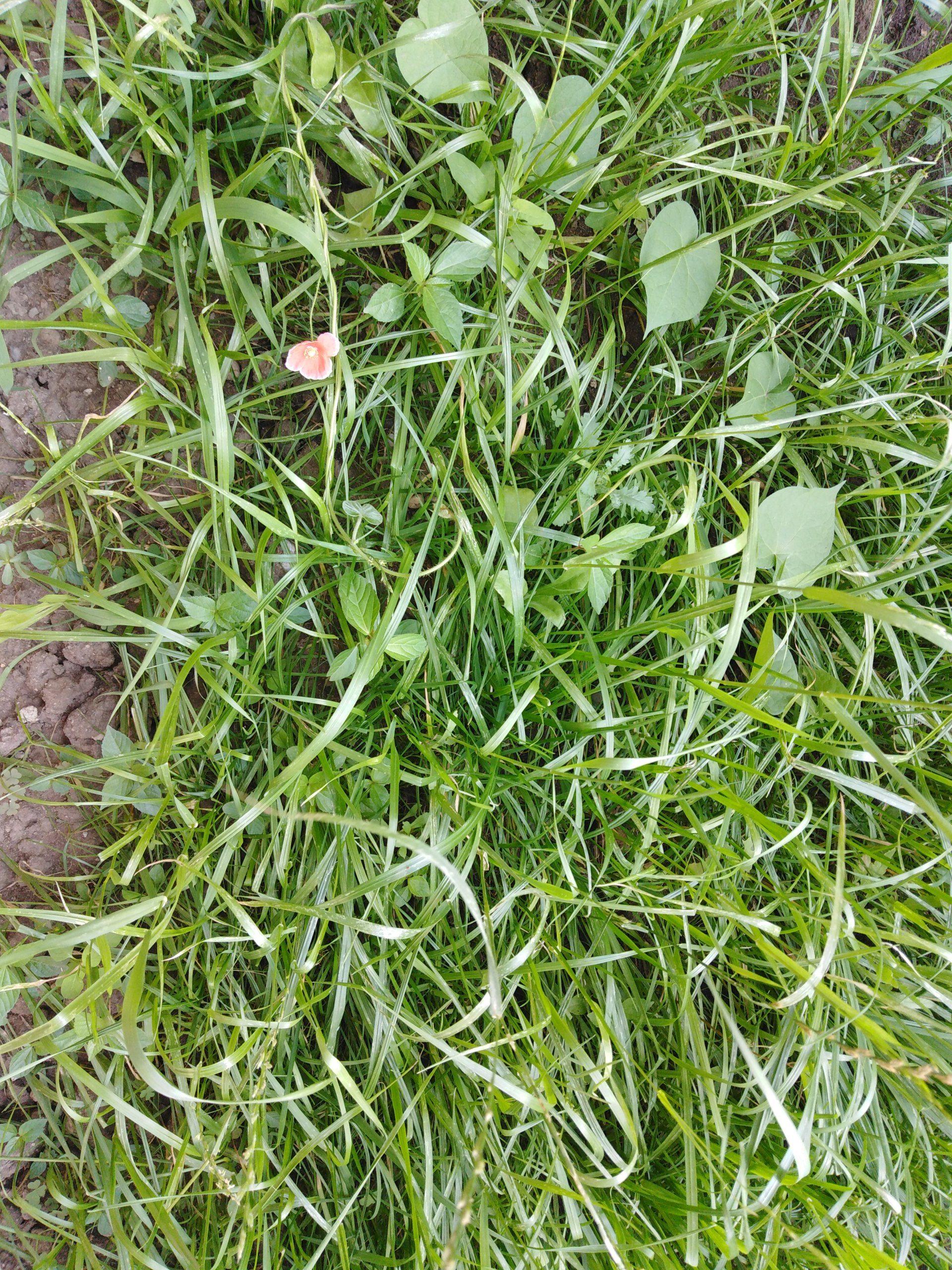Трава, выращенная из семян