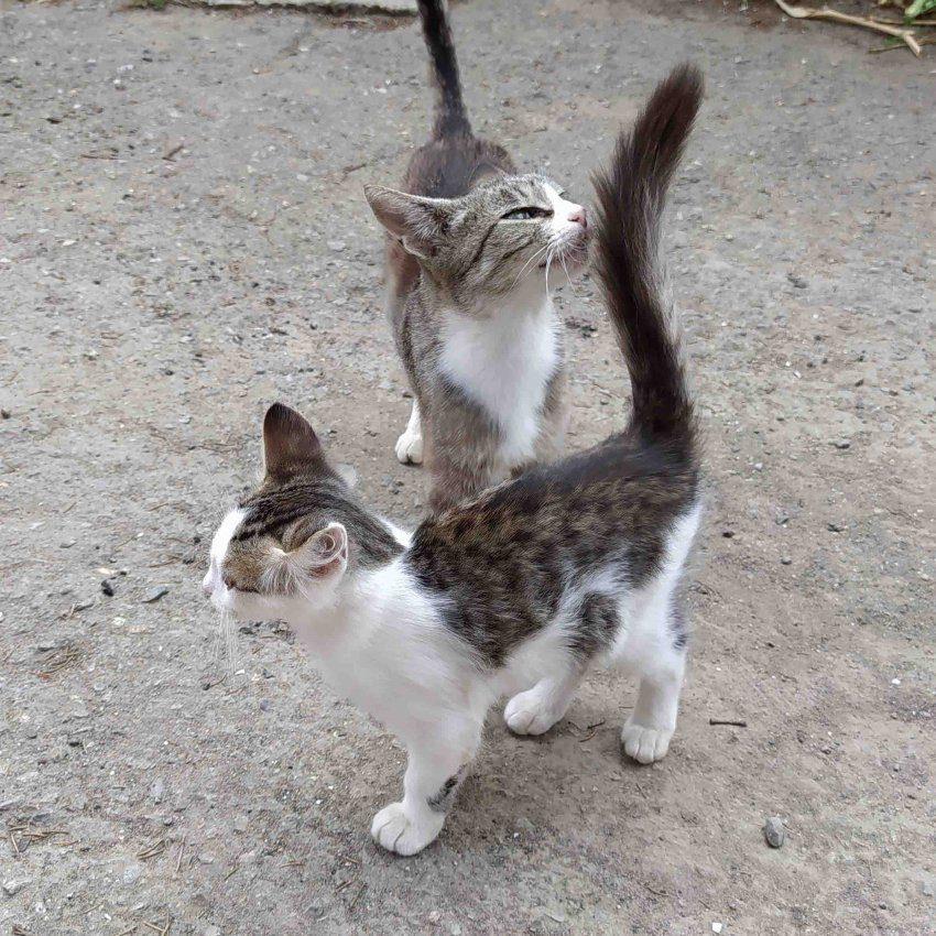 Наши кошачьи