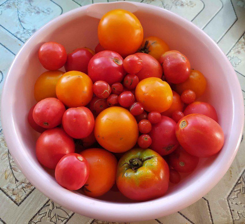 Некондиция помидоры