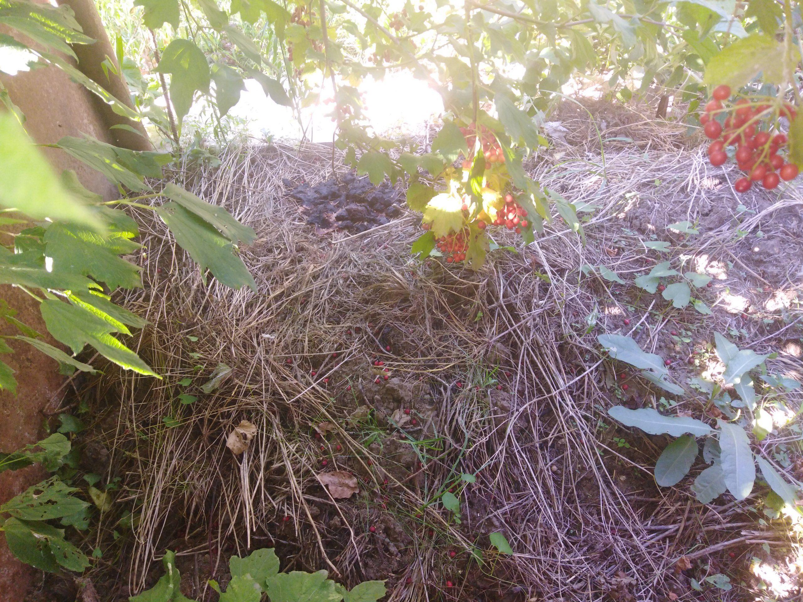 О компостной яме, как источнике удобрения
