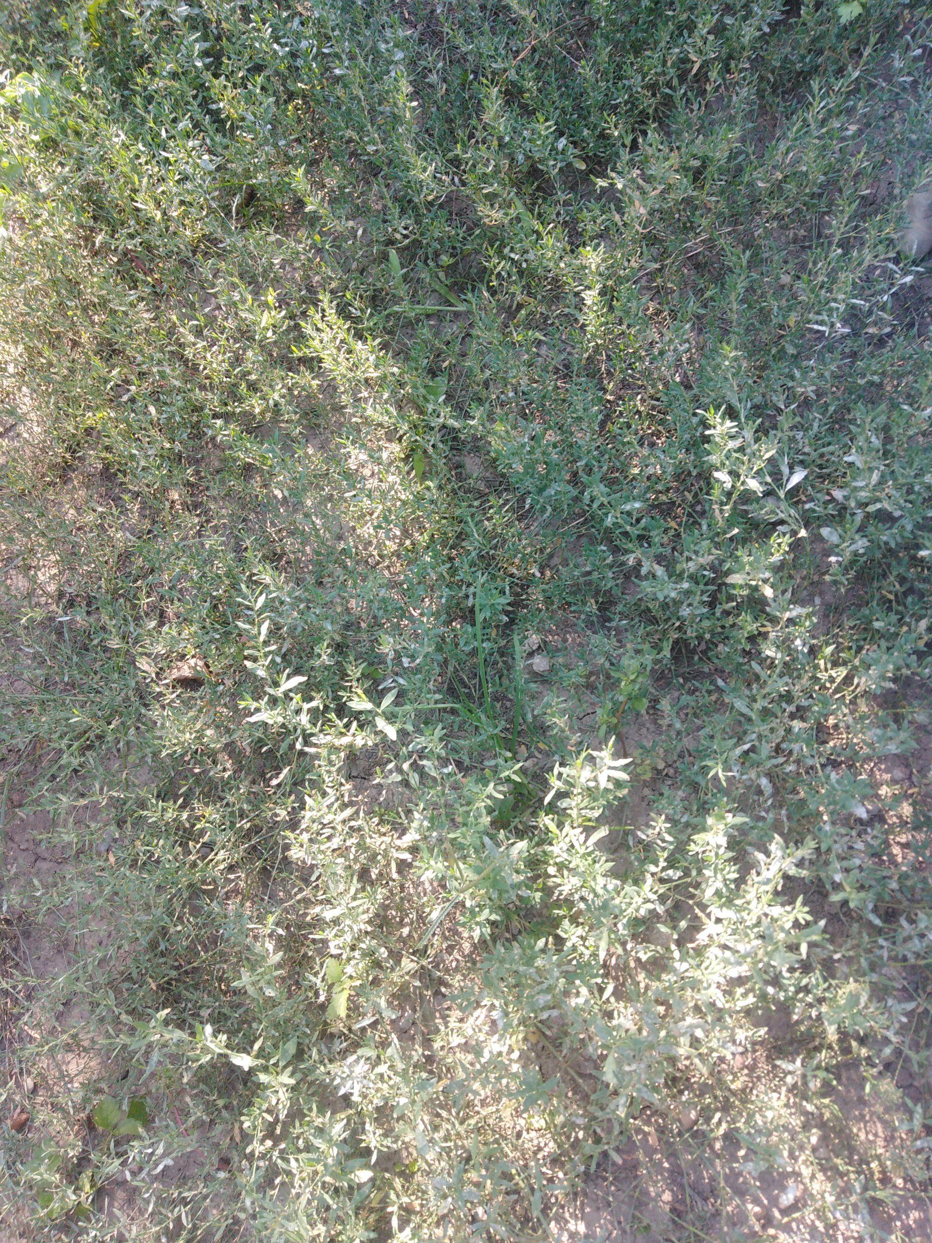 Альтернатива газонной траве