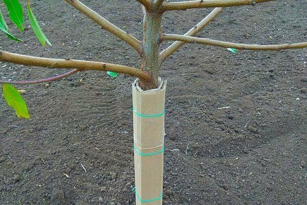 Утепление дерева