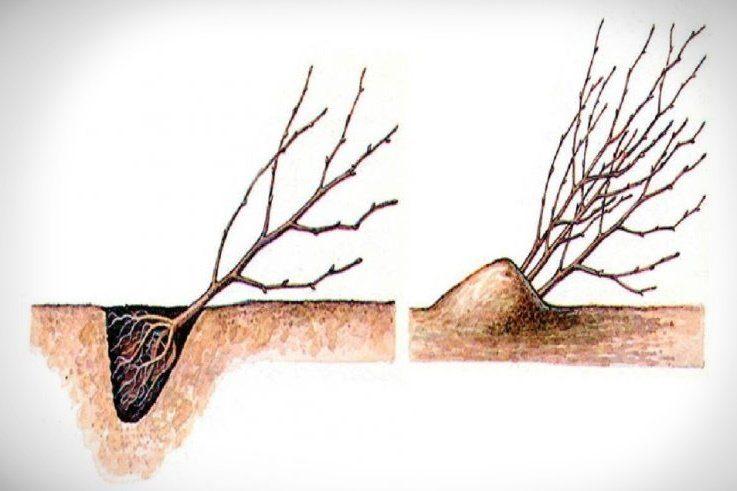 Засыпка деревьев