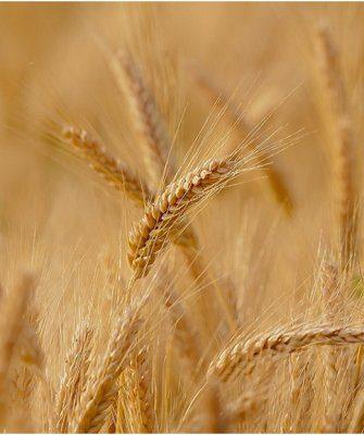 субсидии аграриям