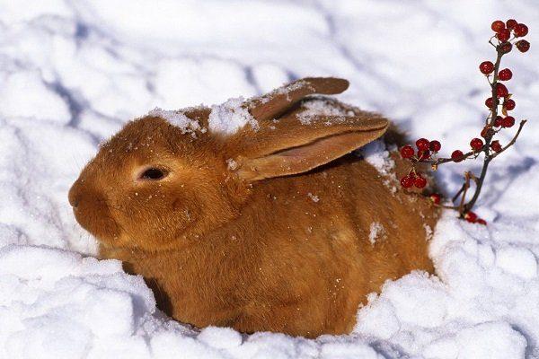 Кролики зимой