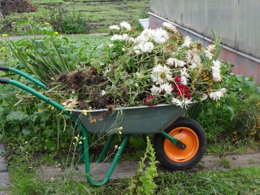 Осенняя уборка в цветниках