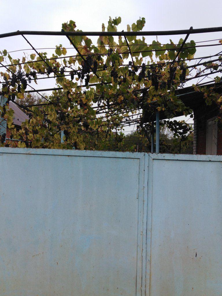 Какие заборы есть в нашей деревне и как возвести ограждение по всем правилам