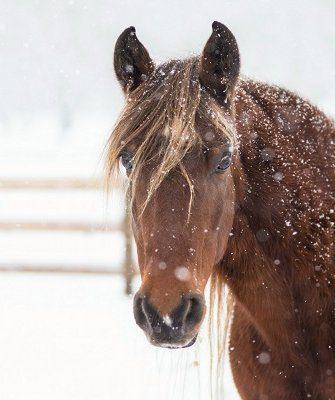 Лошадь зимой